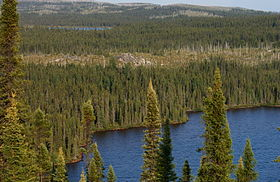 Boreal-Forest-2