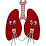 Lung Facts