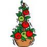 Tomato Plants Facts