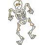 Bones and Skeleton