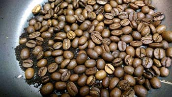Cocoa Beans Plants - Facts for Kids