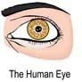 Eye Facts